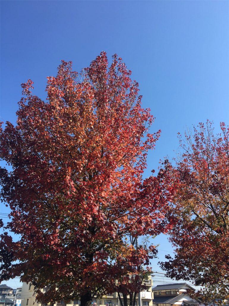 秋も終わります