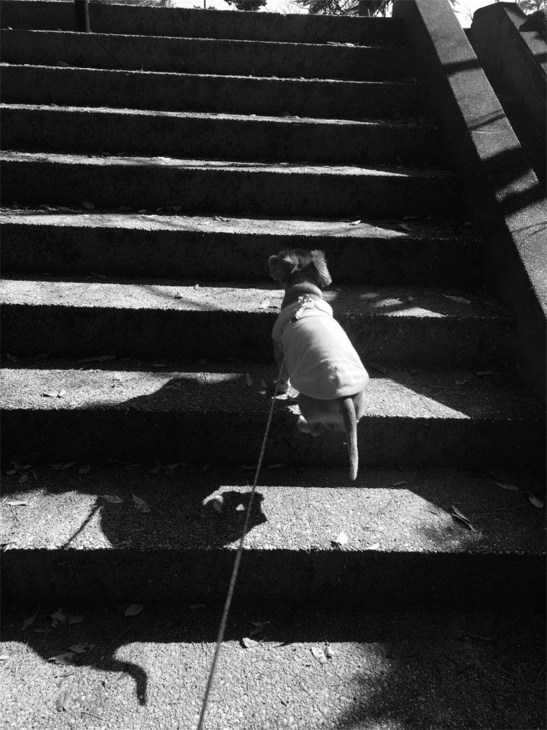 階段よーいどん