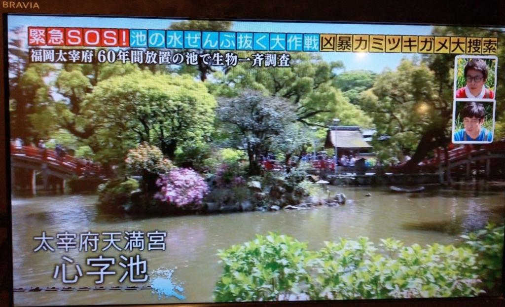 池の水を全部抜く太宰府遊園地ボート池