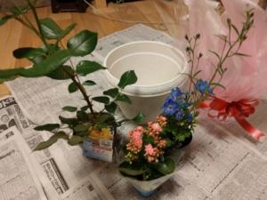 ばらをメインに低い花をあと2つ選びました