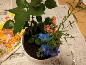 苗と鉢の隙間を埋めます