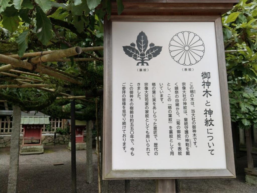 樹齢550年の御神木 菊の御紋と楢の波紋